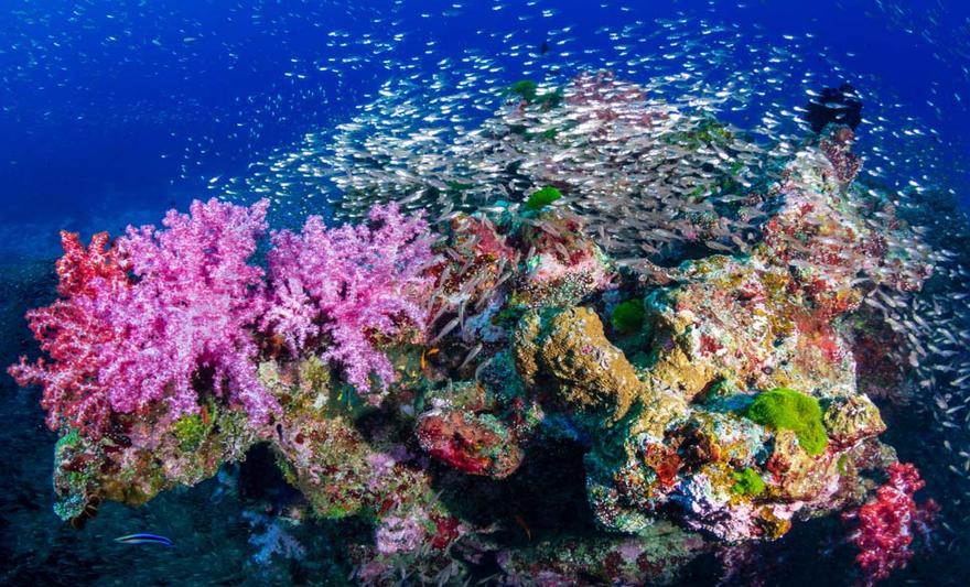 isole per viaggi barriera corallina
