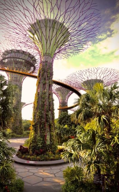 Trees vacanze a Singapore