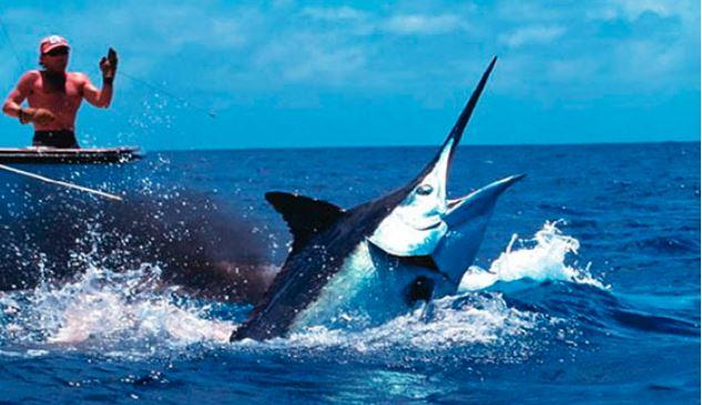 pesca al marlin a cuba